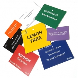 Coloured Engraved Tree Labels