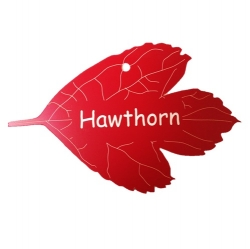 Engraved Hawthorn Tree Leaf Label