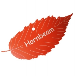 Engraved Hornbeam Leaf Label