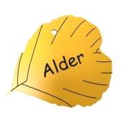 Engraved Alder Leaf Label