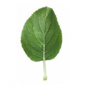 Original Apple Leaf