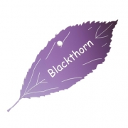Engraved Blackthorn Tree Leaf Label