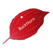 Engraved Buckthorn Tree Leaf Label