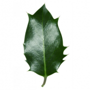 Original Holly Leaf