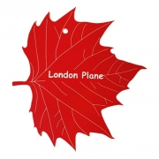 Engraved London Plane Leaf Label