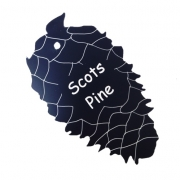 Engraved Scots Pine Leaf Label