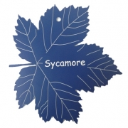 Engraved Sycamore Leaf Label